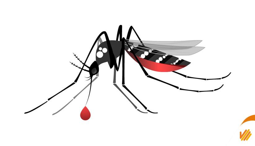 Febre amarela e dengue